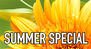 Mimaki Summer Special